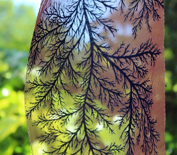Symbiosis - Sheer Coral Print