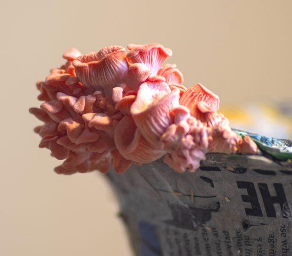 ROCK CAP Mushroom Helmet