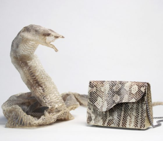 Shedded Snake Skin Fashion-line with Molly Allen